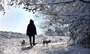 Winter can be beautiful, but even dogs feel the cold.