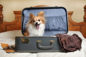 dog-in-suitcase