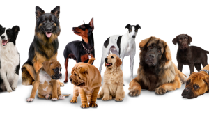 dogs-build-large-group_637