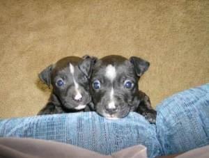 Trinity and Neo as pups.