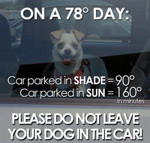 1830.Dog-in-Car-Post-_2800_4_2900_